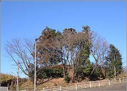 『千代田の一里塚』の画像