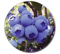 『ブルーベリー』の画像