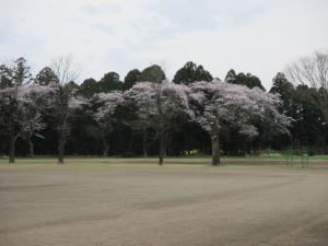 『中学校入学式3』の画像