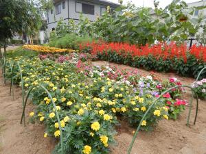 『花いっぱい最優秀賞「第2千代田南団地ガーデン」』の画像