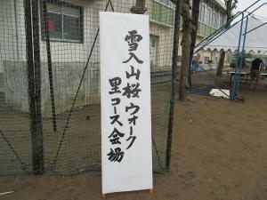 『雪入桜2』の画像