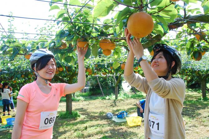 『フルーツ秋フェス13』の画像