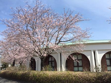 【あじさい館の桜】あじさい館_03