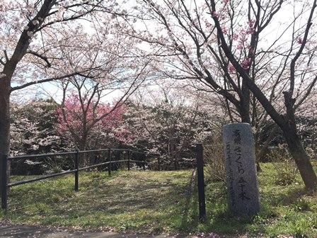【あじさい館の桜】あじさい館_06