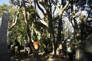 『ジオ歩崎スダジイ』の画像