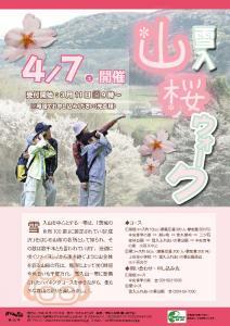 『雪入山桜ウォーク2018』の画像