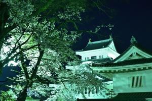 お城と桜(夜)