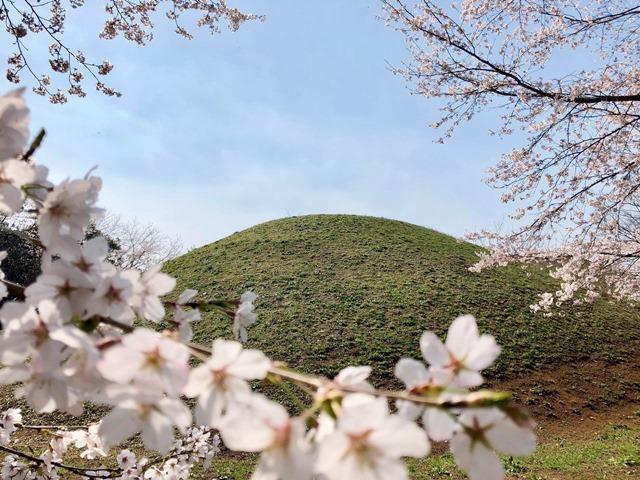 300328下大津・富士見塚 桜6