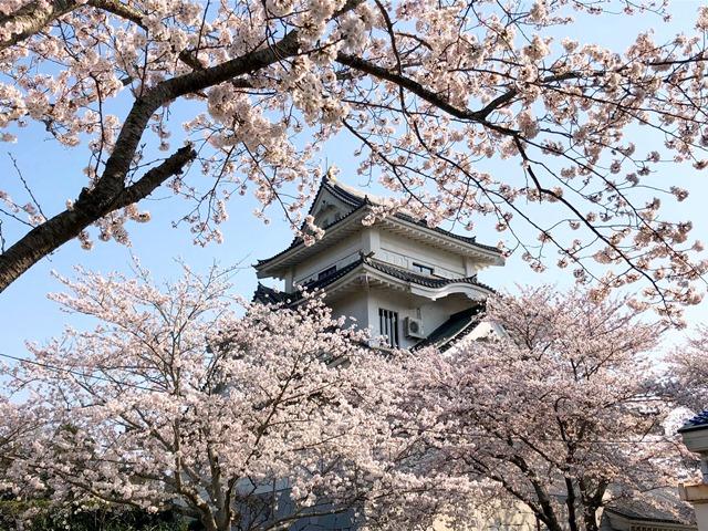 300328下大津・富士見塚 桜8