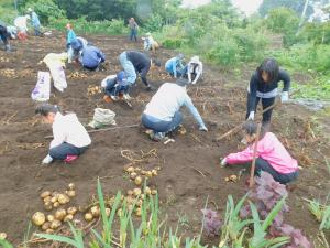 『18芋掘り2』の画像