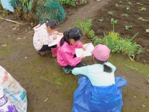 『18芋苗植え3』の画像