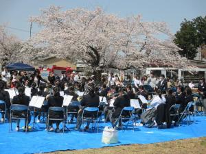 桜まつり(2)
