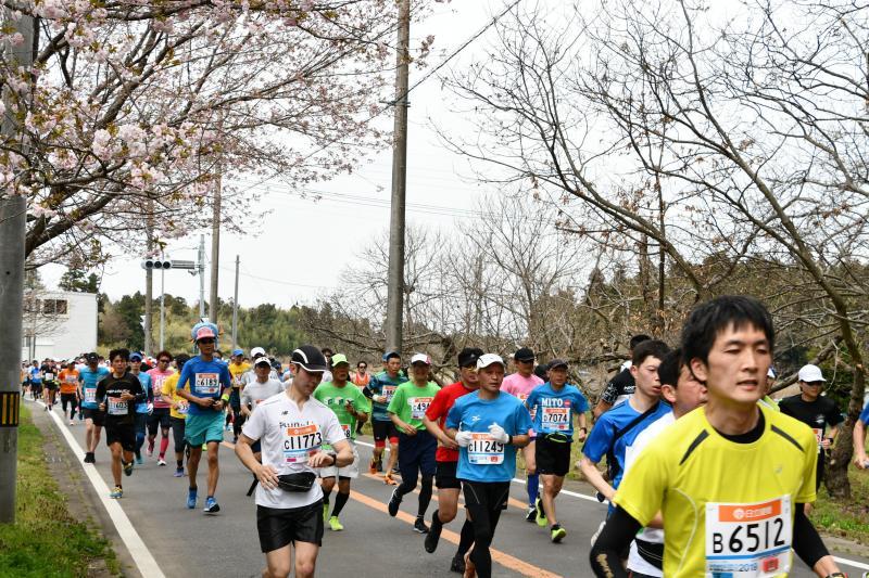 『かすみがうらマラソン2019(12)』の画像