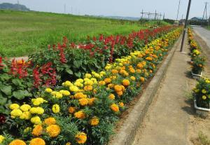 『花いっぱい1東野寺』の画像