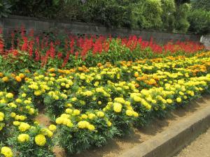 『花いっぱい3下稲吉老人会』の画像