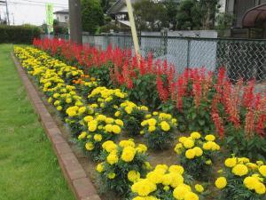 『花いっぱい4大塚自治会』の画像