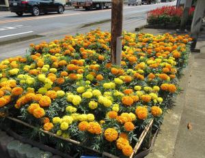 『花いっぱい5清水老人会』の画像