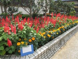『『花いっぱい6千代田南団地』の画像』の画像