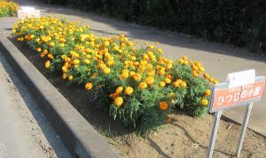 『花のみち1ひつじ』の画像