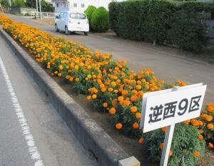 『『『花のみち2坂西9』の画像』の画像』の画像