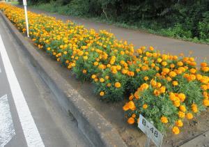 『『『花のみち3新生89』の画像』の画像』の画像