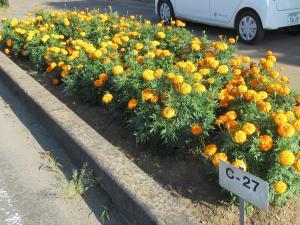『花のみち4岡田』の画像
