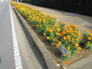 『花のみち5日向寺』の画像