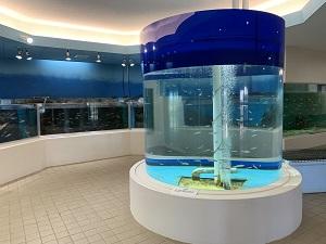 『水族館2』の画像