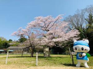 下大津の桜とうにゃ