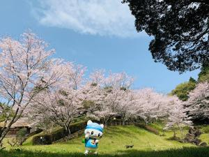 あゆみ庵の桜とうにゃ