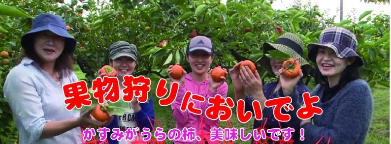 果物狩り(柿)