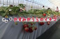 『イチゴ』の写真
