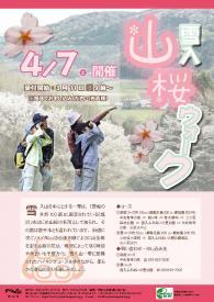 『雪入山桜ウォーク』の写真