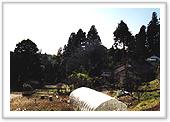 『杉を切り出した屋敷林』の画像